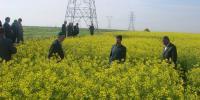 از سوی بانک کشاورزی اقدام شد:واریز ۳۰۰۰ میلیارد ریال وجوه خرید تضمینی محصول استراتژیک کلزا به حساب کشاورزان