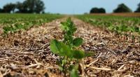 احتمال تنزل کاشت سویای آرژانتین به پایین ترین حد در ظرف ۶ سال گذشته