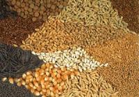 رشد میزان تولید دانه های روغنی و غلات کانادا
