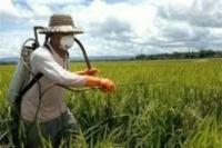 قیمت سموم بخش کشاورزی به شدت افزایش می یابد| 50 کارخانه چینی تعطیل شدند