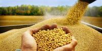 تداوم خرید تضمینی دانهیروغنی سویا در کشور