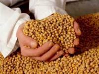 صنایع روغنکشی آرژانتین در جستجوی جذب دانه سویا